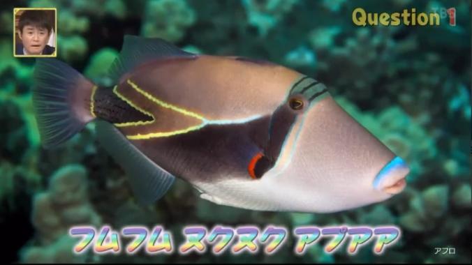 フムフム ヌクヌク アプ アア ハワイ 魚